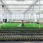 Greenhouse Heaters